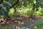 Gleaning September 2014 by DC Central Kitchen