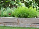 Color photo of a raised garden bed with greenery and a red snapdragon flower